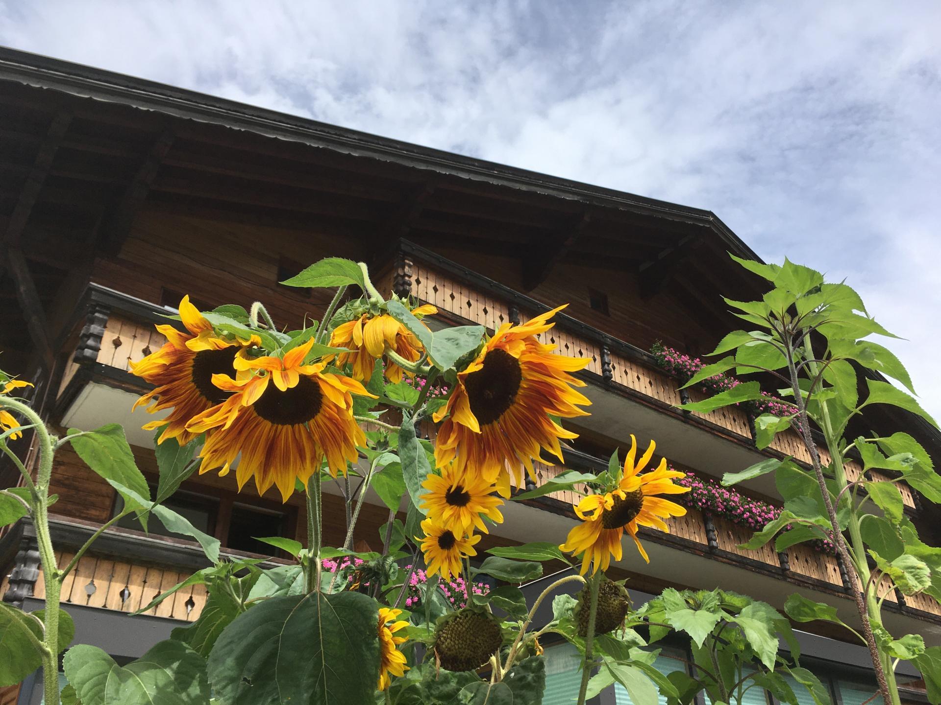Alpspitz #Willkommen#Bildergalerie