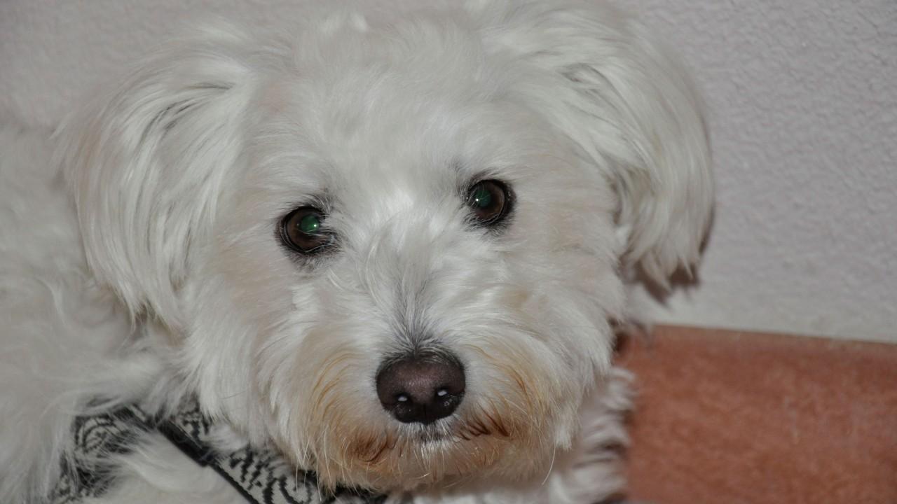 Familienhund Lucky